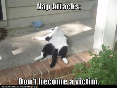 Nap Attacks