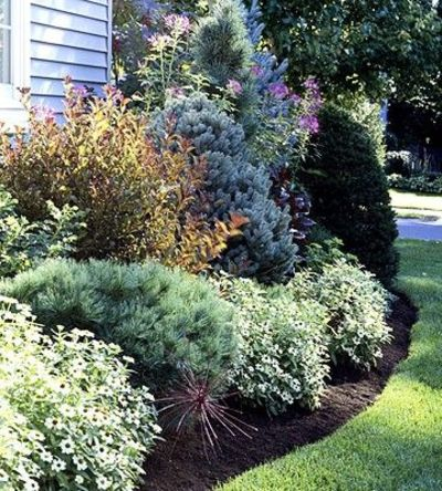 Evergreen bushes hide foundation landscape yard for Great bushes for landscaping