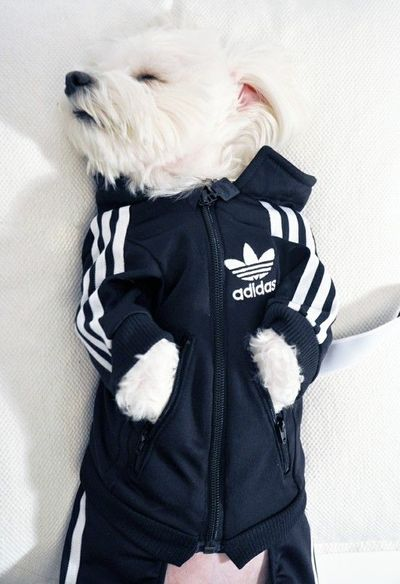 i want that for my doggy!