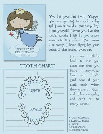 image about Free Printable Tooth Fairy Certificate identify absolutely free printable teeth fairy certification with teeth chart