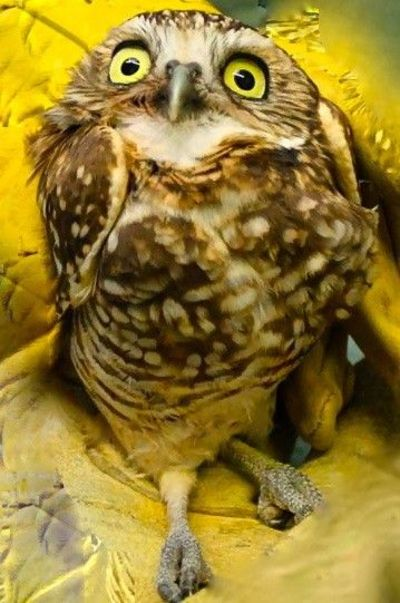 Owl-scared looking