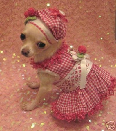 Cherry dog dress set chihuahua clothes clothes for my - Dog clothes for chihuahuas ...