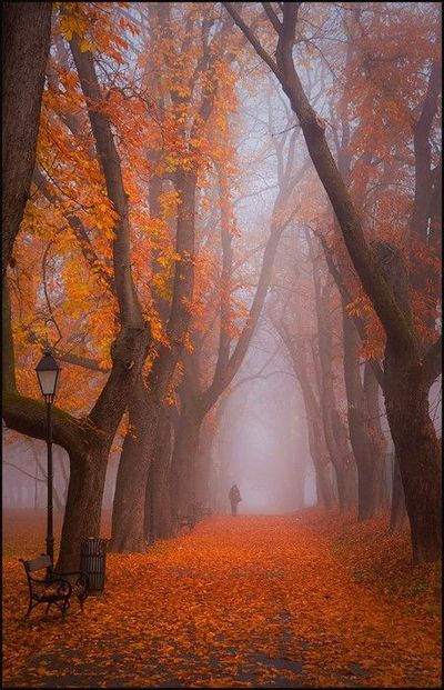 Foggy Autumn.