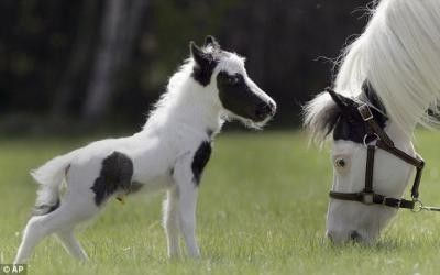 World's Smallest Horse and probably cutest! / birds ...