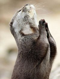 Dear Lord�€�Please bring me some Fish