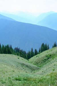 Hurricane Ridge at Olympic National Park in WA. Easy to access these amazing views by car or excellent hikes for the outdoor lover.