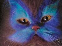 """Photo from the book """"Why Paint Cats"""""""