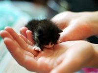 This little ball of cute was lost but found. She was smaller than a palm when she found her hoomans, but with lots of love and TLC, the little one thrived. They named her Lucky. �€œMe and my son found this LITTLE CHILD in the garden. Its mother...