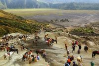 Hope Valley Photo and caption by Edita Grebliunaite Early morning, Bromo volcano in Indonesia. Local people are waiting for tourist to take them to the top of volcano with their horses. But most of people climb by themselves.