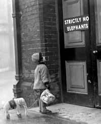 no elephants