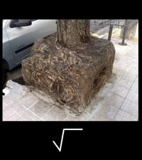 Square Root :)