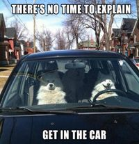 There's no time to explain! Get in the car!