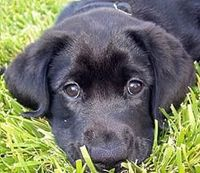 I'm trying to convince my parents that we need a lab