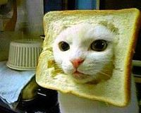 """the sad reality of in-bread cats.'"