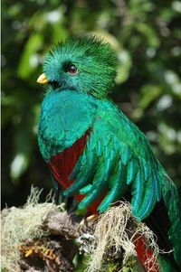 A Resplendent Quetzal, from Central America and the national bird of Guatemala, gorgeous, isn't it?