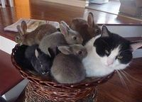 Cat and bunnies.