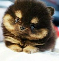 Oh my! Cute overload!