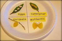 butterfly life cycle (in pasta!)