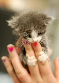 This kitty is precious