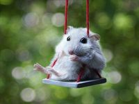 Mouse on swing