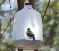 How to Build a Milk Jug Bird Feeder