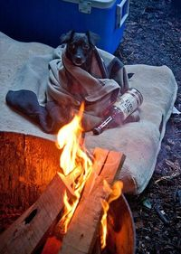 camping with a buddy