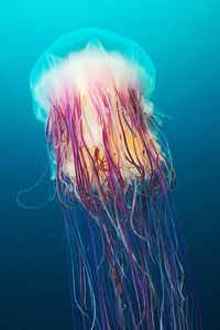 rare jellyfish photography