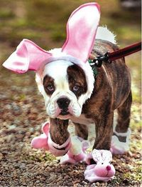 Cute #Easter puppy