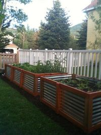 galvanized raised bed
