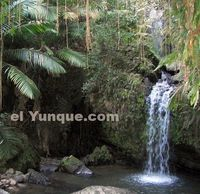 ElYunque rainforest. Hiking trails. Tours available. Entrance is FREE.