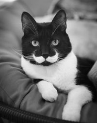 a cat with a mustache